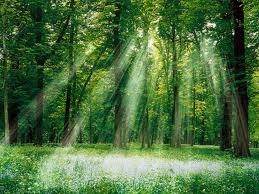 Infos dans les arbres est la natures ghtu