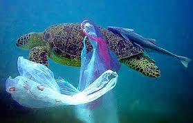 écologie dans les déchets images-1