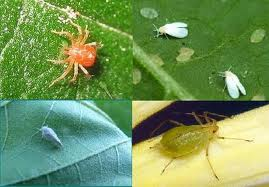 les insectes  dans les animaux lololo