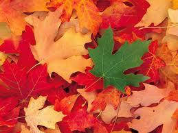 Pourquoi les feuilles tombent-elles en automne ? dans les arbres est la natures rvverjdc
